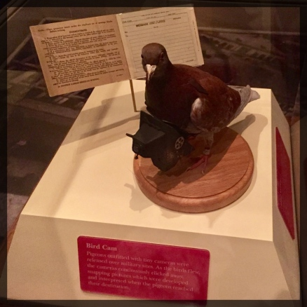 Spy Museum Washington WWII Bird Cam